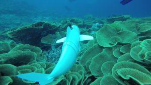 SoFi o Peixe Robótico nos Leva a Uma Descoberta Através dos Oceanos