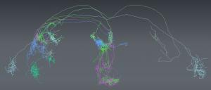 Um 'Google Maps' para Mapeamento do Cérebro.