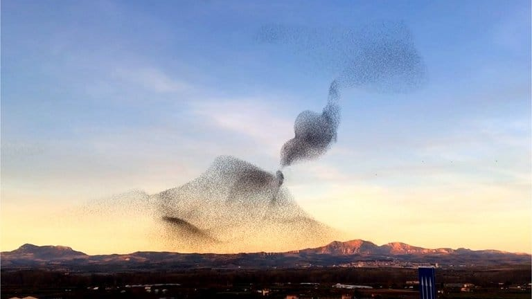 As mais belas atuações da natureza inspiram a próxima geração de inteligência artificial